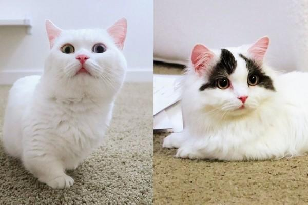 Hai Pencinta Kucing! 5 Channel YouTube yang Wajib Kamu Tonton