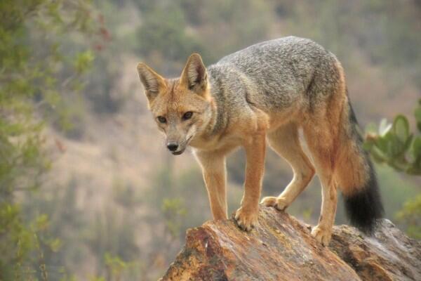 5 Hewan Endemik Asal Patagonia Ini Punya Bentuk yang Menarik