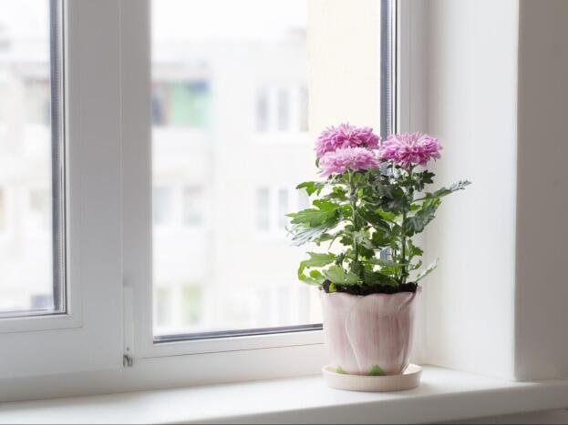 Tanaman untuk Kamar Tidur yang Membantu Bersihkan Udara