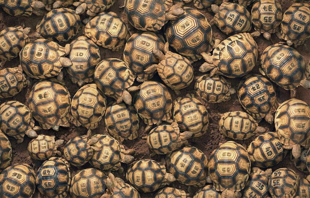 Hewan-Hewan Terancam Punah, Yang Bikin Agan Gak Rela Kehilangan Mereka