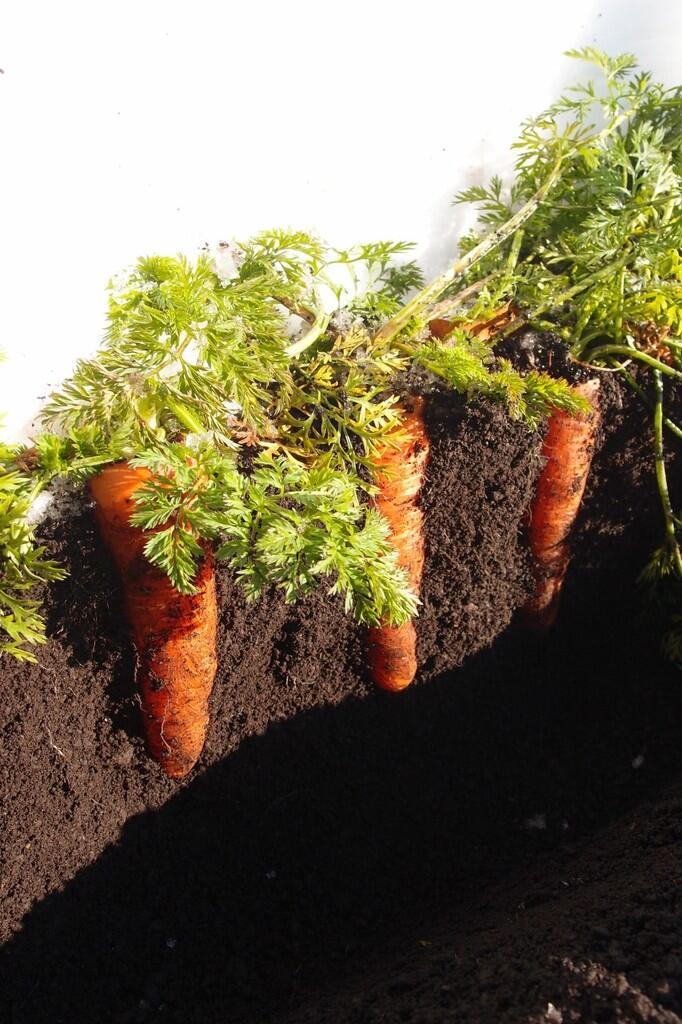 Suka Berkebun? Ini Trik Sederhana Agar Sayuran Rasanya Lebih Manis dan Segar