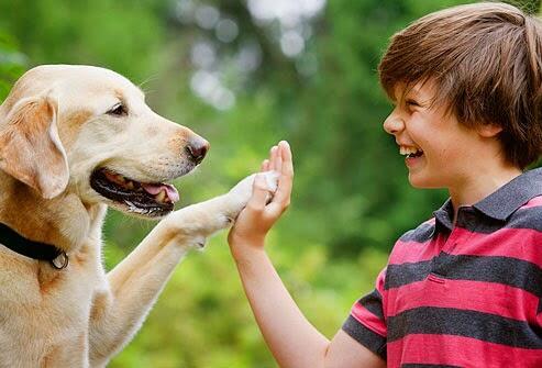 Buat Para Newbie, Ini Gan Cara Membuat Anjing Peliharaan Menjadi Lebih Pintar!