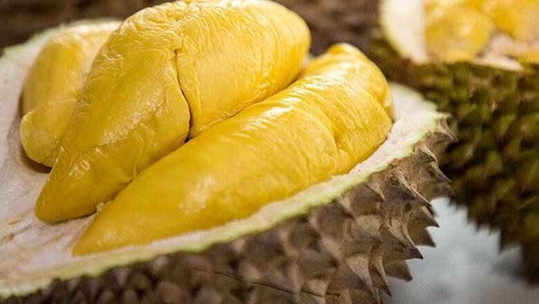 Pembenci Durian VS Penyuka Durian, Kubu Yang Manakah Kamu ???