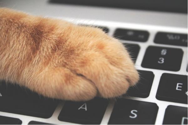 7 Tips Simpel Memilih Laptop Bagi Kamu yang Hobi Menulis