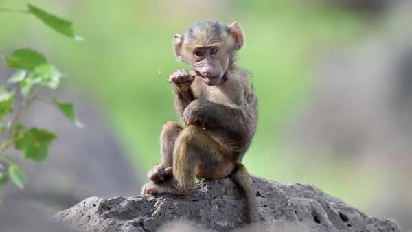 8 Fakta Penyakit Cacar Monyet yang Sudah Masuk ke Singapura