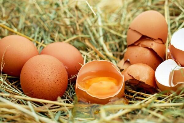 6 Ide Kreatif Olah Limbah Cangkang Telur