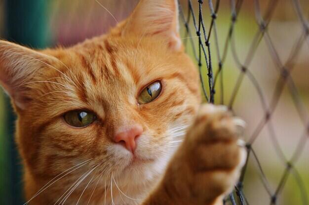 Ternyata Ini Gan, Alasan Kenapa Kucing Bisa Selalu Pulang ke Rumah Saat Tersesat