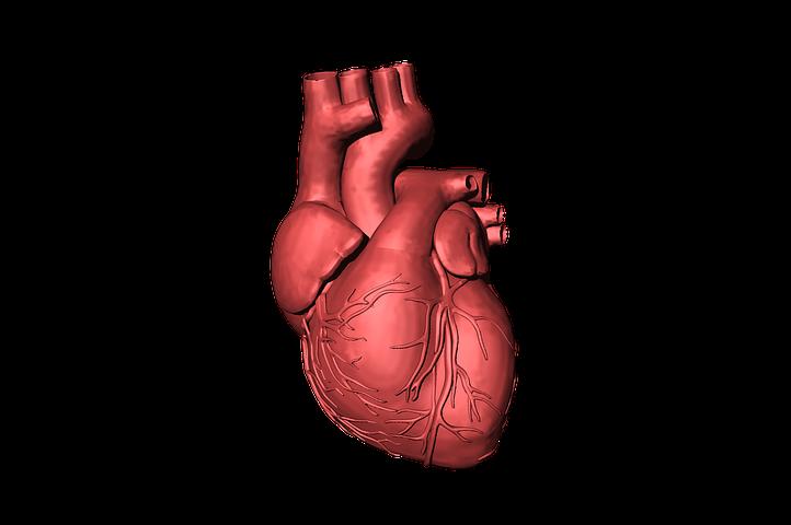 Amazing, Ilmuwan Berhasil Menciptakan Jantung 3D dari Sel Manusia!