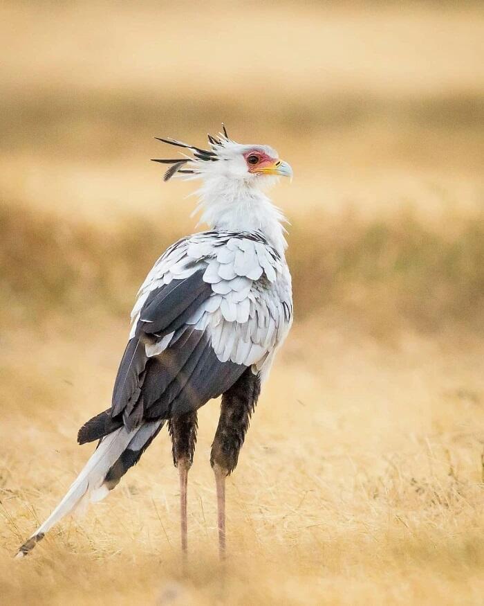 Cantik Banget! Bulu Mata Burung Ini Fix Bikin Cewek-cewek Iri