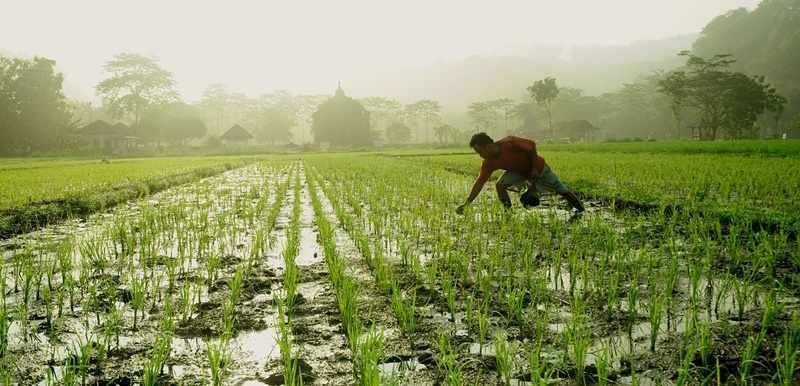Kemunduran Pertanian, Saatnya Ganti Mentan?