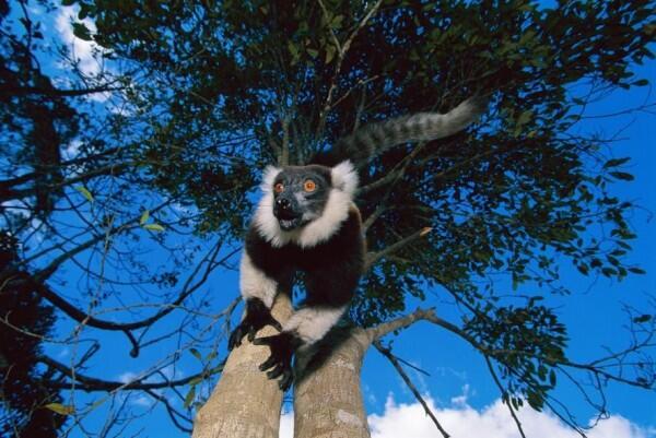 10 Hewan dengan Penglihatan Terbaik di Dunia, Mangsa Mana Bisa Lepas?