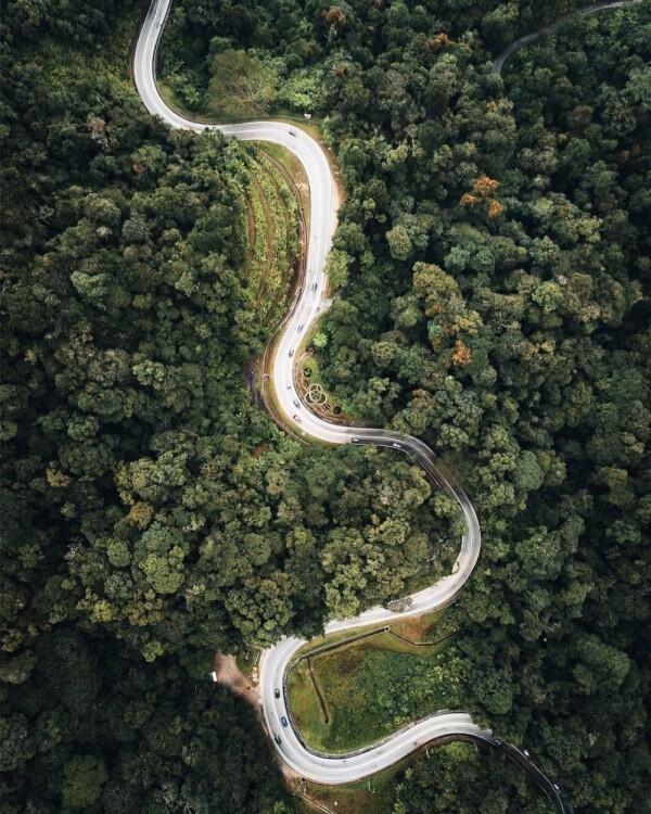 7 Hutan Megah di Dunia yang Tak Bisa Kamu Temui di Indonesia