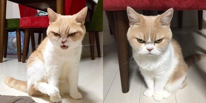 Agan Sista Punya Kucing yang Galak? Bisa Jadi Karena Meniru Kebiasaan Kita Lho