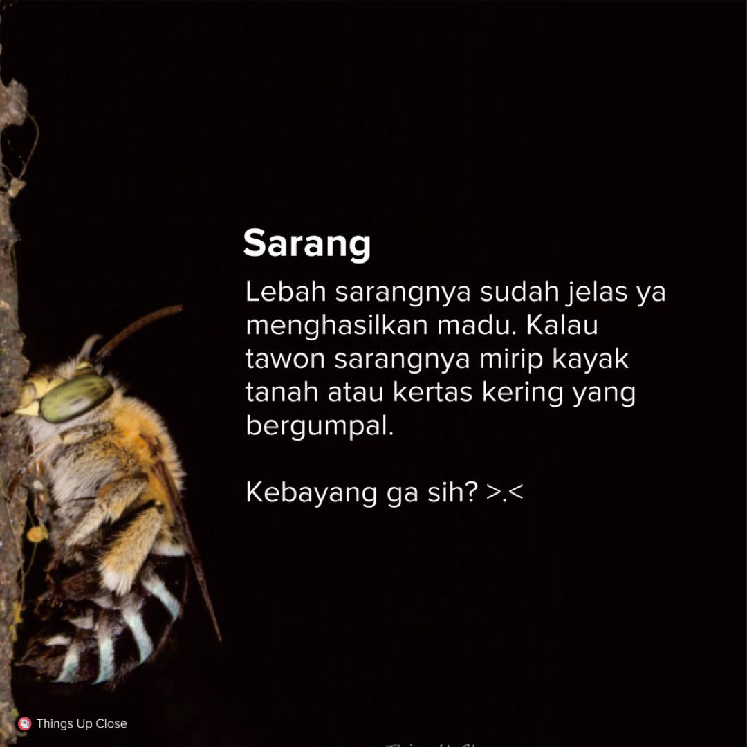 Perbedaan Tawon dengan Lebah. Wajib tau!