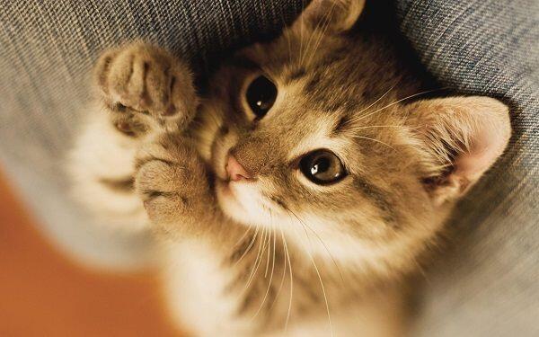 7 Ciri Ini Mengindikasikan Kucing Kesayanganmu Sedang Demam, Waspada!