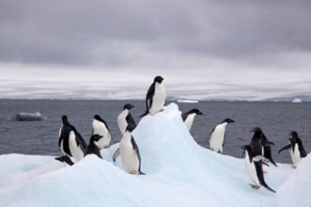 Penakluk Antartika Asal Jepang
