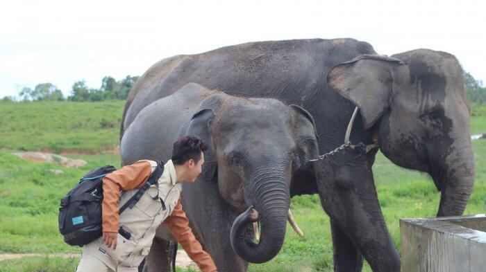 Viral Turis Ditampar Gajah Sampai Mental, Lucu Gan!