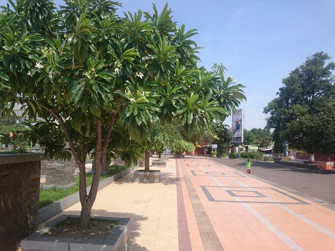 Nama-nama Kawasan di Jakarta Ini Diambil dari Nama Buah, Begini Penampakannya!