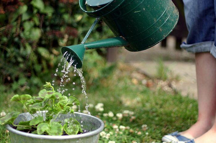 Ternyata, Menyiram Tanaman Nggak Hanya Sekadar Mengguyurnya dengan Air Aja Lho!