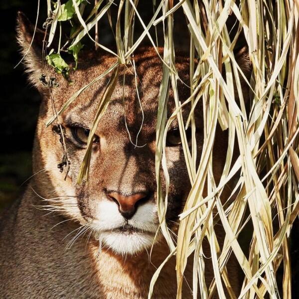Tempat Wisata Taman Safari Bogor Harga Tiket Rute Dan