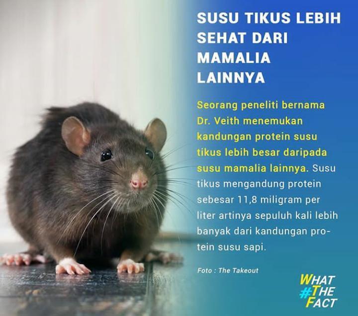 Susu Tikus!? Oh No, dia lebih hebat