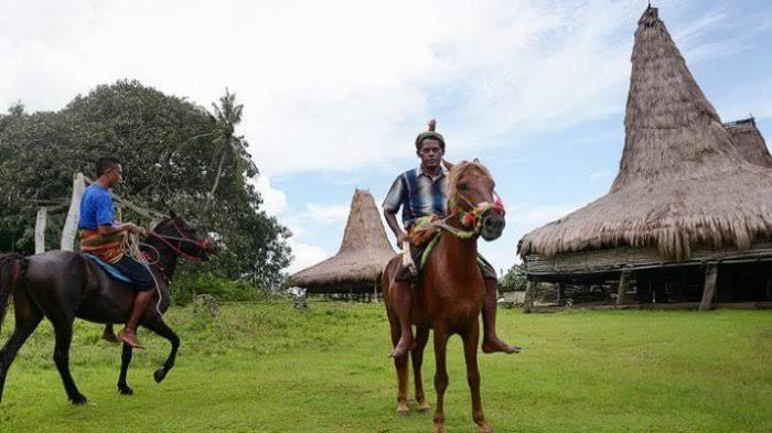 Sandalwood !! Mengenal Kuda Poni Asli Indonesia