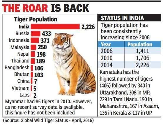 Disaat Populasi Harimau Indonesia Menurun, Di Negara ini Malah Meningkat