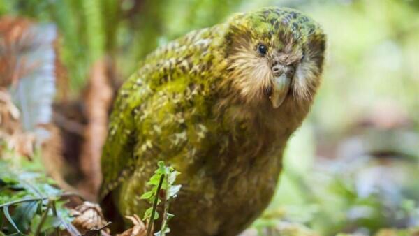 8 Burung Ini Ditakdirkan Tak Bisa Terbang, Kasihan atau Justru Untung?