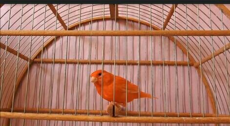 Manusia Ini lihay, Banyak Burung Yang Menjadi Korban