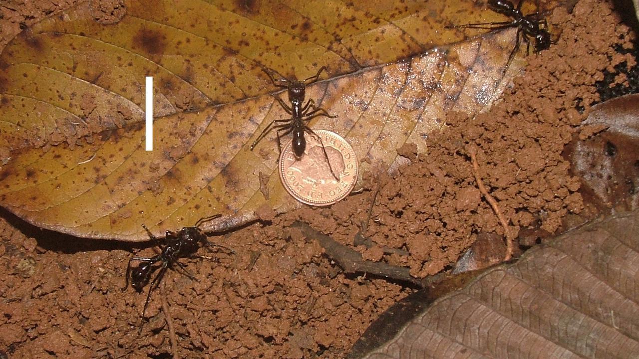 Beracun, Menyakitkan... 6 Serangga Paling Menakutkan di Dunia