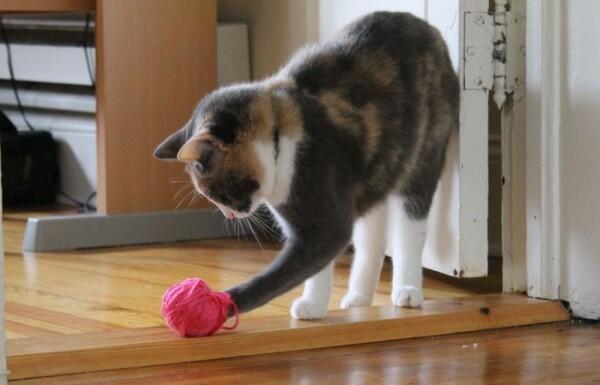 Cuma Butuh Tiga Bahan, Bikin 6 Mainan Buat Kucing Yuk