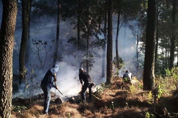Ini Trik Tim Gabungan untuk Kurangi Area yang Terbakar di TNGC