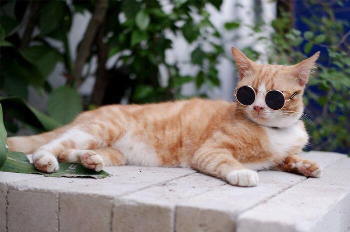 Kalau Kucing Kamu Bertingkah Aneh Kayak Gini, Tandanya dia Senang Sama Kamu!
