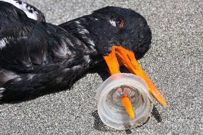 Potret Pilu Dampak Sampah Terhadap Kehidupan Binatang