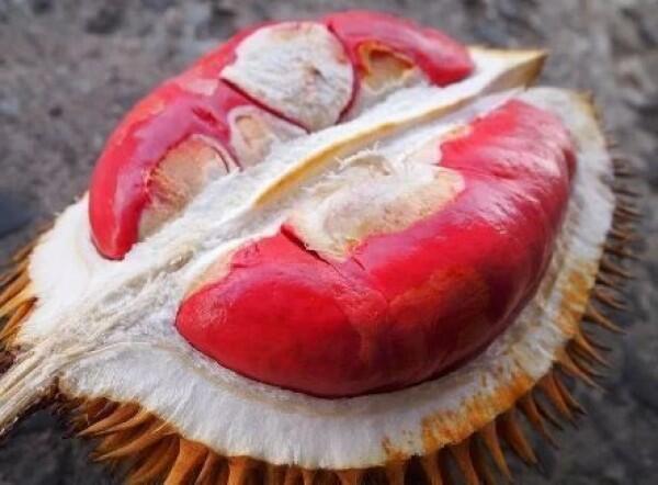 6 Daerah Penghasil Durian Terenak di Pulau Jawa, Makan Sampai Mblenger