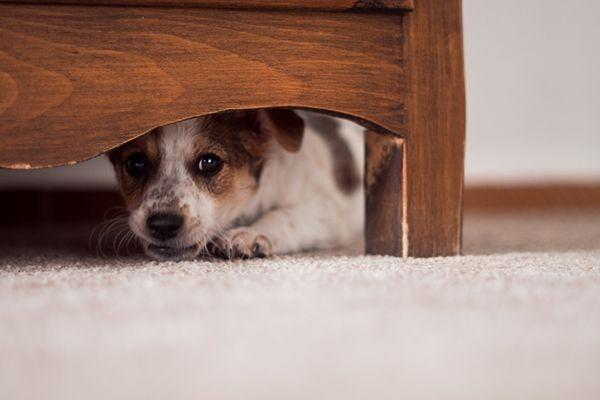 Ternyata Anjing Juga Bisa Depresi, Kenali 7 Tanda Khususnya di Sini!