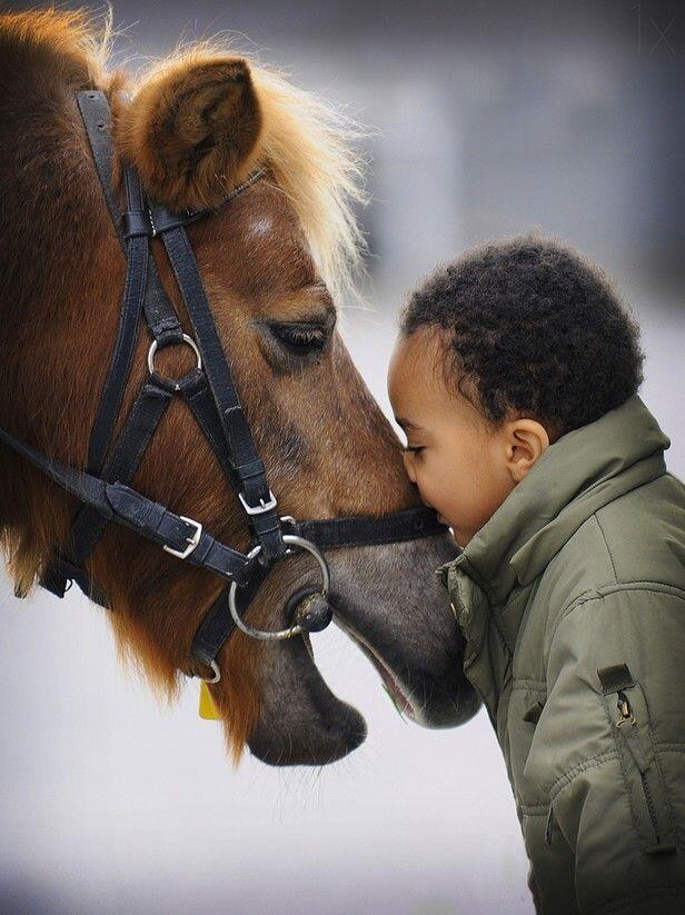 Kuda, Salah Satu Hewan Paling Berjasa Bagi Manusia Yang Kita Sia-Siakan 🤧