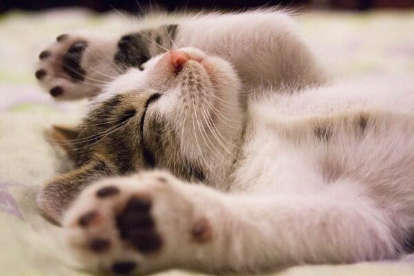 7 Makna Idiom Inggris Menggunakan Kata Kucing, Unik Banget!