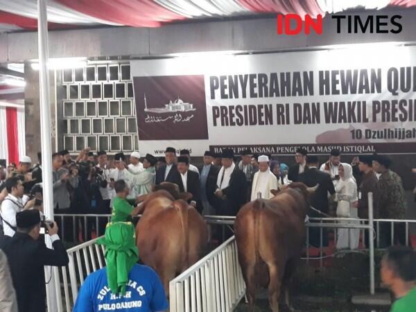 Sapi Jokowi Jadi Hewan Kurban Pertama yang Disembelih di Istiqlal