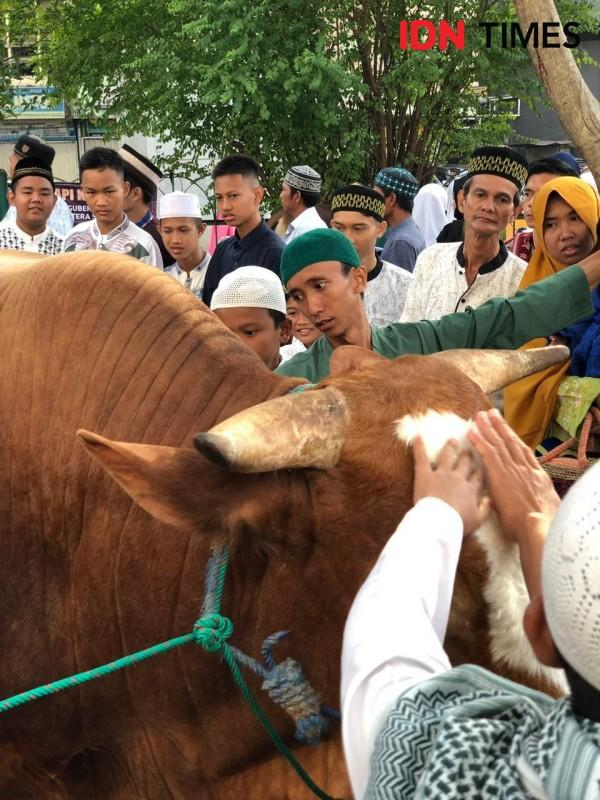 Sapi Kurban Jokowi di Palembang Jadi Sasaran Swafoto Warga