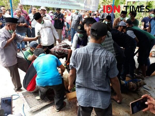 Sapi Kurban Jokowi di Gunungkidul Lukai Warga saat Hendak Disembelih