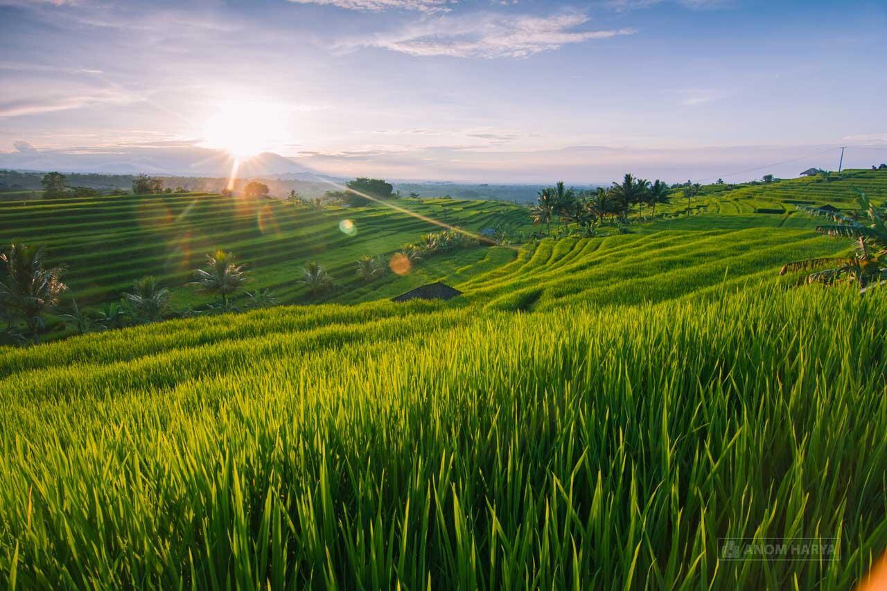 Andai Terlahir Kembali, Saya Ingin Tetap Lahir di Indonesia