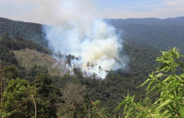 Gunung Sumbing Terbakar, Titik Api Berpotensi Meluas