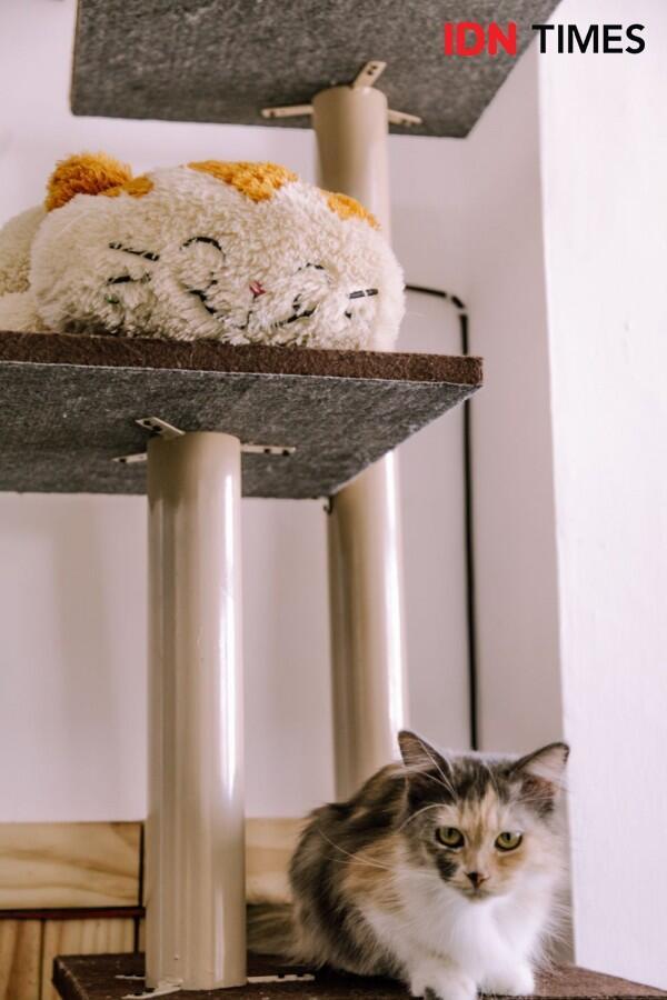20 Potret Unik Neko Kepo Sebagai Kafe Kucing Pertama di Surabaya
