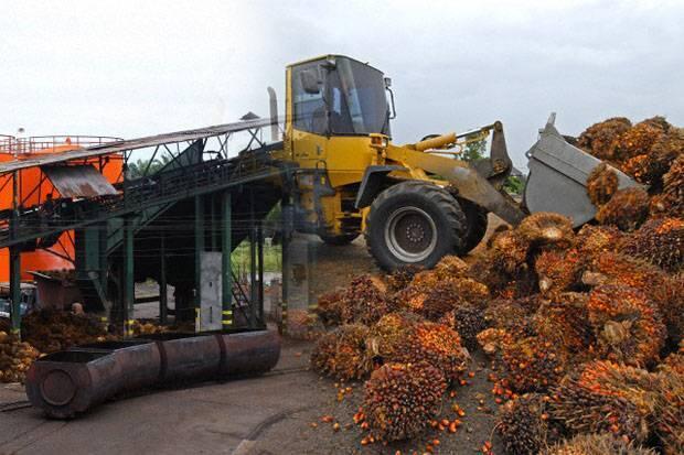 Genjot SDM Kompeten Demi Capai Produksi Sawit RI Terbesar di Dunia