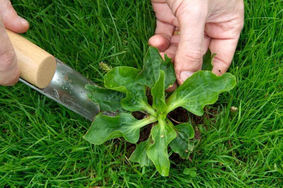 Jarang yang Tahu ! Inilah Cara Menghilangkan Rumput Liar Dengan Cepat