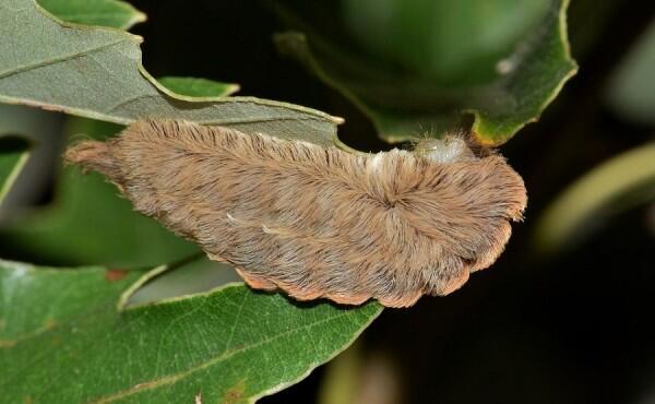 7 Cara Serangga Melindungi Diri, Ada yang Berpura-pura Mati Lho!