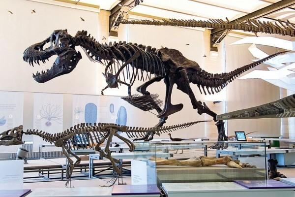 Dinosaurus Baru Ditemukan di Museum Afrika Selatan, Genusnya Asing loh