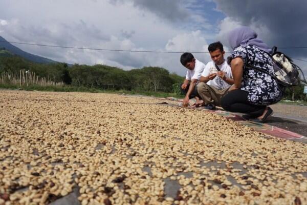 Pemerintah Ajak Petani Kopi Bergabung untuk Lawan Tengkulak
