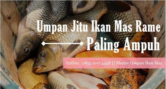 Umpan Jitu Ikan Mas Rame Terlengkap Paling Ampuh